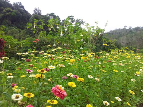 Winter Flowers For The Garden Betong Thailand Betong Attractions All You Need To Chen S
