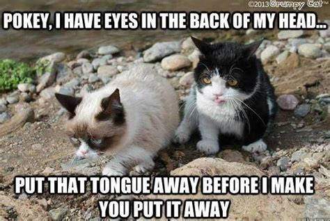 Tardar Sauce Meme - grumpy cat and brother pokey love pokey he s such a cute