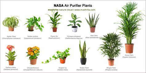 air purifying plants  nasa clean air study
