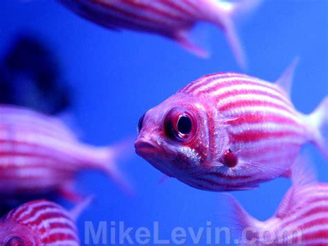 Aquarium Fish L by Aquarium Fish Fish World