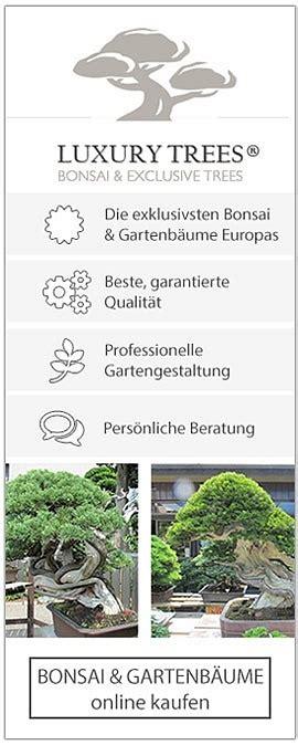 Pflege Bonsai 6380 by Bonsai Baum 187 Geschichte Arten Pflege Tipps