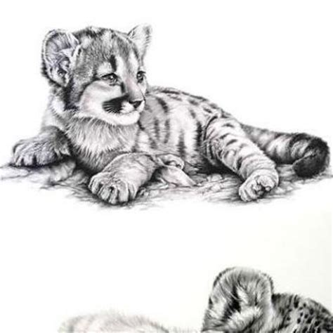 baby tiger tattoo tattoo collections