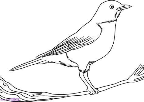 how to draw doodle birds photos free sketches of birds drawing gallery