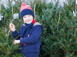 choosing a christmas tree fresh cut christmas trees