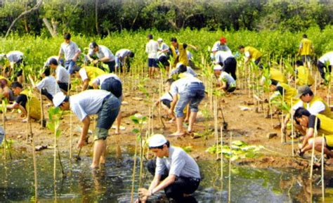 Upaya Pelestarian Lingkungan Hidup Ori pelestarian lingkungan hidup lingkungan hidup suci ristiani xii farmasi 3
