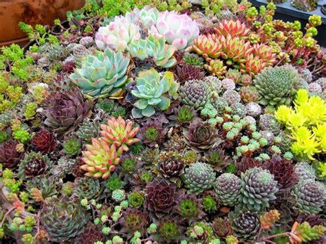 Vendita Online Piante | piante grasse online piante grasse vendita piante