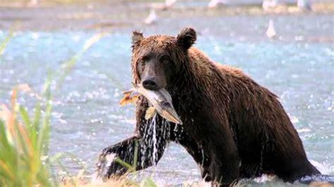 oso pardo oso pardo oso pardo ib 233 rico youtube