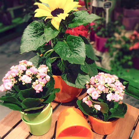 Pflegeleichte Grünpflanzen Garten by Ruptos Kinderzimmer Neu Gestalten