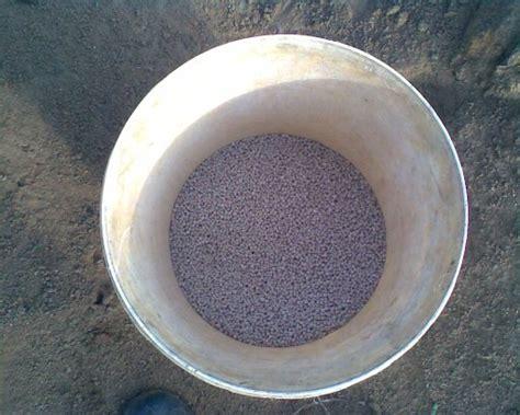 Benih Jagung Manis Asian Honey pertanian 187 archive 187 membaja buah jagung manis