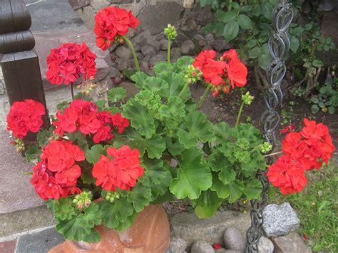 Garten Pflanzen Oktober by Ihr Garten Im Oktober Mein Garten Ratgeber