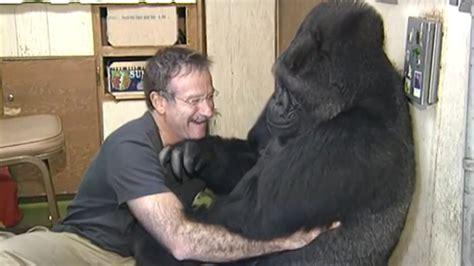 Koko Ravel robin williams mourned by koko the gorilla today