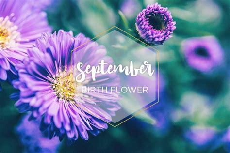september birth flower aster september birth flower birth flowers september flowers