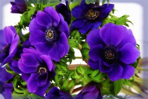 imagenes flores bonitas gratis fotos de flores bonitas gratis color violeta imagenes de