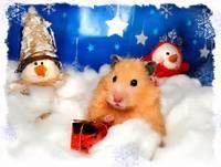 Animal Tails  Christmas Countdown 2 Days To Go