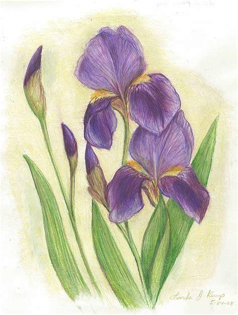 my purple irises drawing by linda nielsen