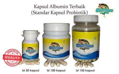 Chalbumin Kapsul Albumin Ikan Gabus Probiotik Albumin tahukah anda protein ikan gabus itu tinggi