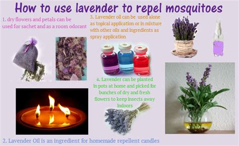 How To Keep Mosquitoes Out Of House by Lavender For Mosquito Repellent Candles Sprays And Creams
