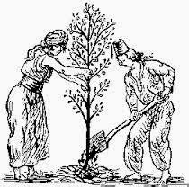 coltivare il proprio giardino orizzonti perduti jung l illuminismo e le forze destino