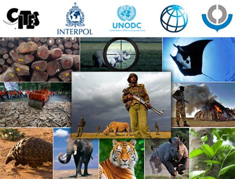 global alliance celebrates 5 years achievements in