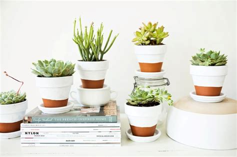 Indoor Succulent Planter by Succulent Planter To Make Awesome Indoor Garden Homesfeed