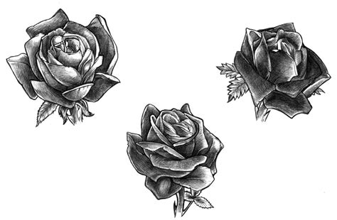 black rose tattoo design tatto black designs ideas photos images
