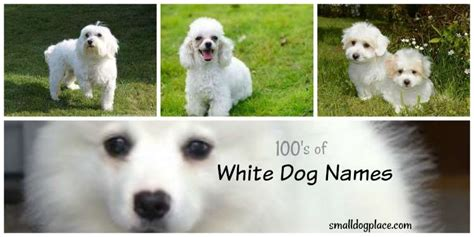 names for white dogs best white names for your new white puppy