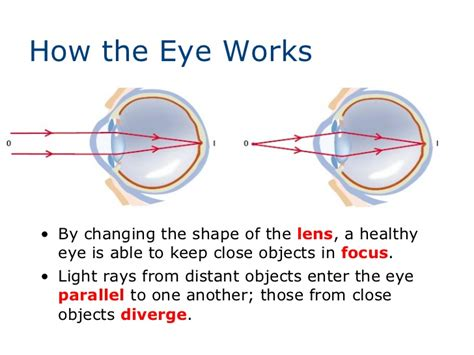 lenses that change with light lenses and the human eye