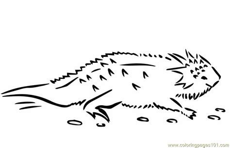 coloring page horned lizard horned toad coloring pages