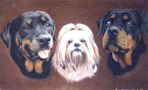 shih tzu rottweiler dogs 4 pictures
