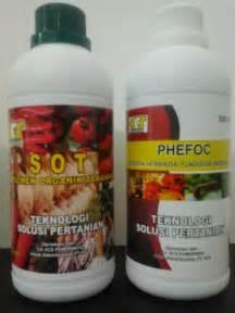Fungisida Pembasmi Jamur cara terbaik membasmi hama tanaman wereng organik