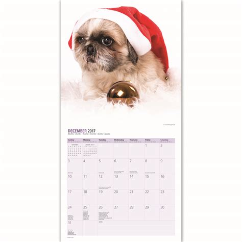 ebay shih tzu puppies shih tzu puppies 2017 16 month calendar ebay