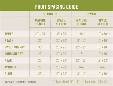 fruit tree planting guide fruitful harvest 2011 out here magazine tractor