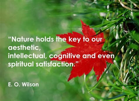 Nature Quotes Nature Study And Outdoor Education For Exciting Adventures