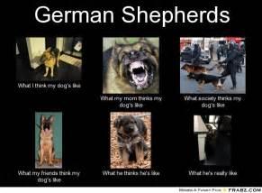 Funny German Memes - funny german shepherd memes