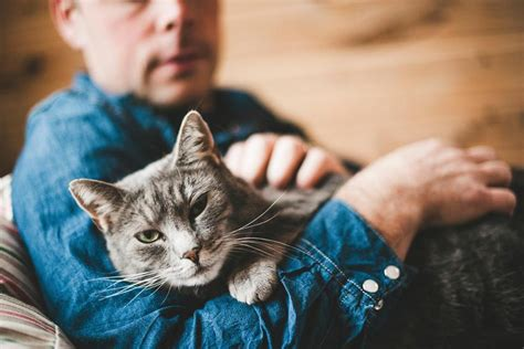how to a not to attack cats cats may prevent attacks in their owners cat daily news