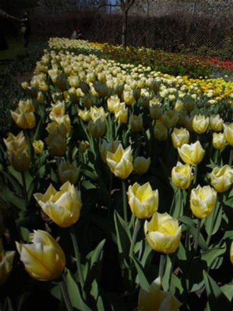 Britzer Garten Ostereiersuche by Blumenzwiebeln Pflanzung Pflege Mein Garten Ratgeber