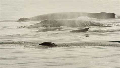 boat parts close to me show me nature photography raquo blog archive 187 a whale