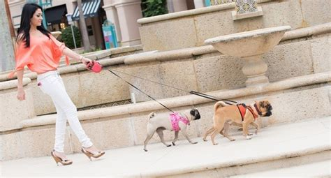 how much walking does a pug need how much exercise does your actually need leashes optional