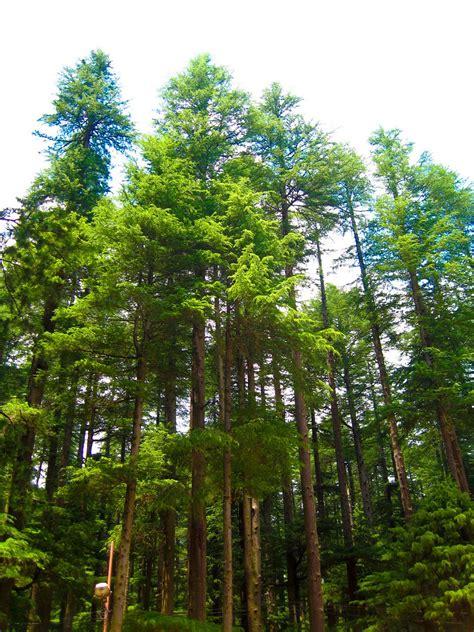 tree footwa