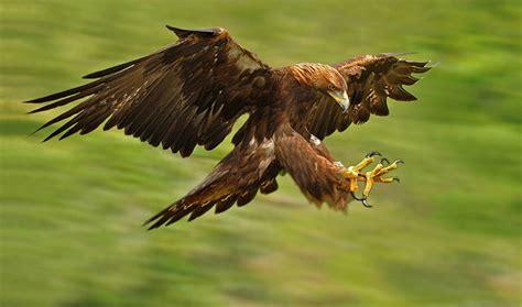 Fossil Me 3114 Original 640x378px golden eagle 42 47 kb 242791