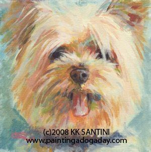 how much yorkie poo cost how much does a morkie cost breeds picture