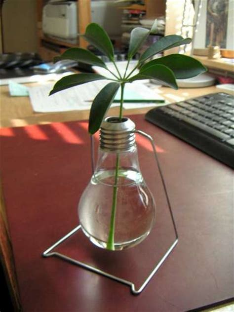Light Bulb Planter Diy by Diy Light Bulb Planters And Mini Terrariums Bring Many