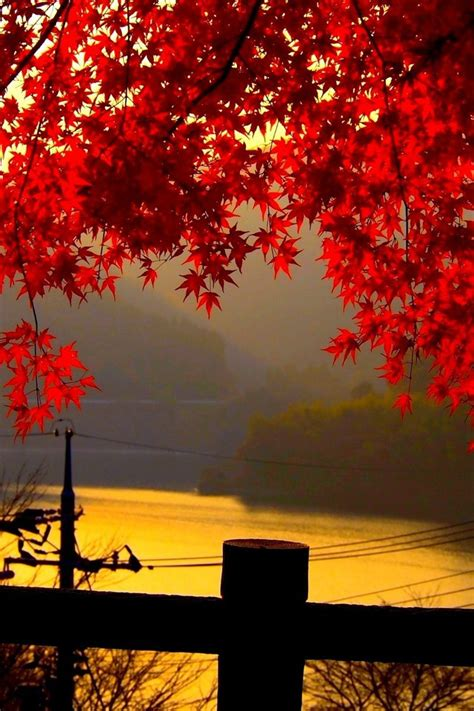 red autumn leaves  dusk wallpaper allwallpaperin
