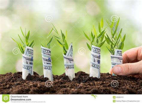 a to a dollar growing the family business coins add up books person planting money plants stock photo image 50582410