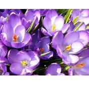 Flori De Primavara Branduse Poze Cu