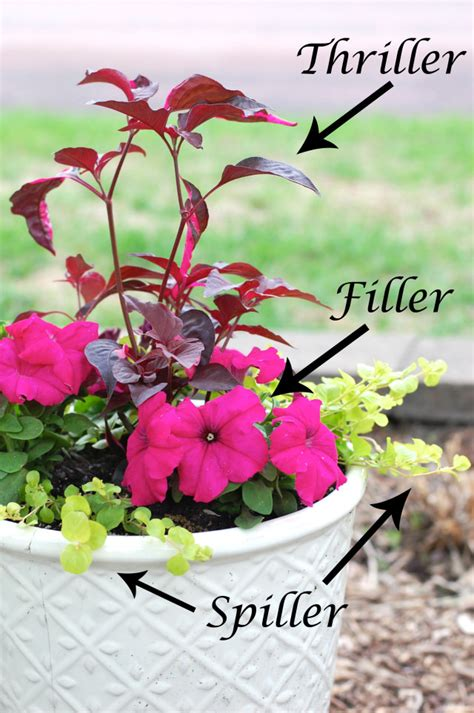 Planting Flowers In Planters by Planting Flower Pots Thriller Spiller Filler Container