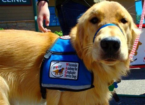 types of service dogs 8 types of service dogs we should be grateful for