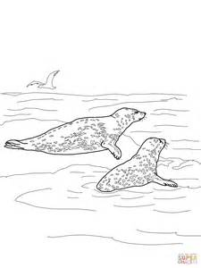 leopard seal page coloring pages