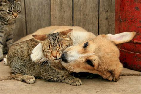 cat kiss wallpaper wallpaper cat dog hug kiss desktop wallpaper 187 animals