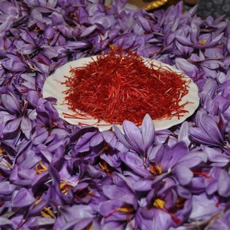 fiore zafferano fiore dello zafferano aromatiche caratteristiche